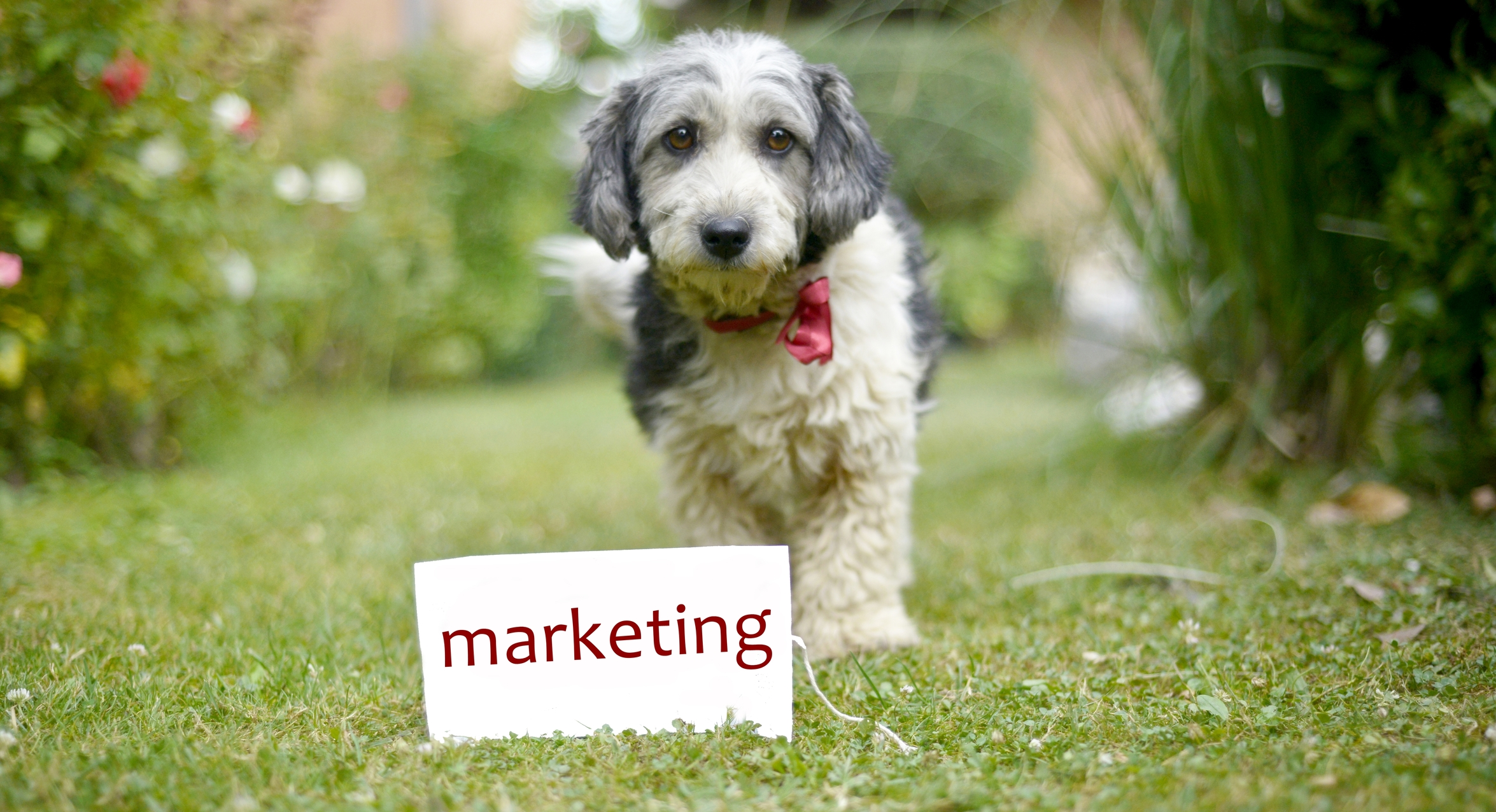 dog marketing